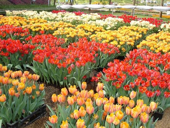"""เทศกาลดอกไม้บาน ณ อุทยานหลวงราชพฤกษ์ 2555"""" (Flora Fest' @ Royal Park Rajapruek 2012)"""