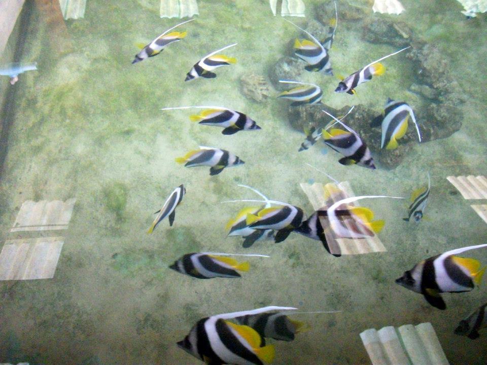 ฟาร์มปลาการ์ตูน