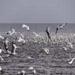 นกนางนวล สถานตากอากาศบางปู จังหวัดสมุทรปราการ