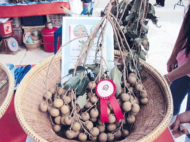 จังหวัดหนองบัวลำภู เชิญเที่ยว งานเทศกาลเที่ยวหอยหิน กินลำไย ไหว้หลวงปู่ขาว ประจำปี 2556 ชมหุ่นยนต์ไดโนเสาร์เคลื่อนไหวเสมือนจริง ตัวแรกของไทย