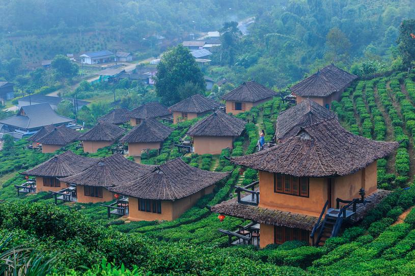 ผลการค้นหารูปภาพสำหรับ บ้านรักไทย ไร่ชา โรงอบชา