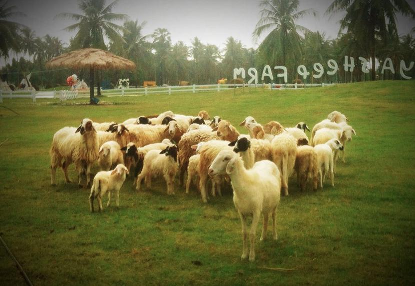 เที่ยวฟาร์มแกะพัทยา (Pattaya Sheep Farm) จังหวัดชลบุรี