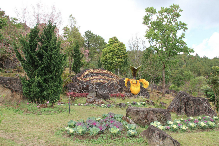 เที่ยวชมดอกพญาเสือโคร่งบานรับลมหนาวบนดอยอินทนนท์ ณ ศูนย์อนุรักษ์พันธุ์กล้วยไม้รองเท้านารี อุทยานแห่งชาติดอยอินทนนท์ จังหวัดเชียงใหม่