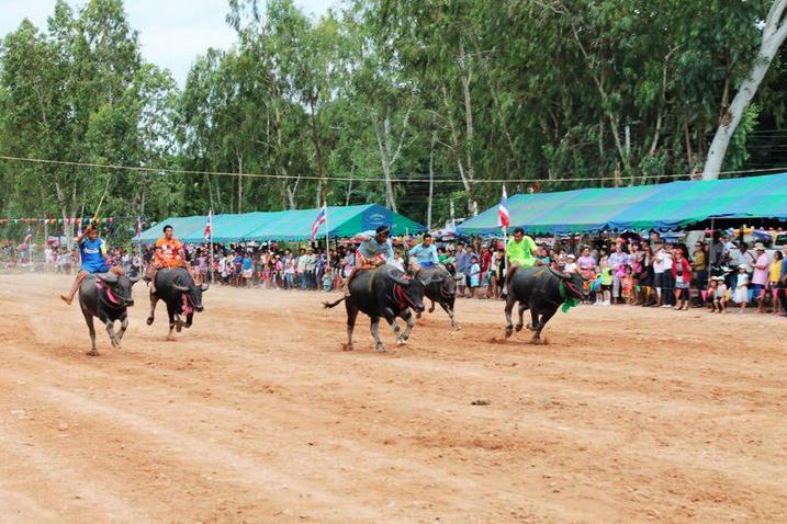 """ททท. สำนักงานพัทยา ขอเชิญนักท่องเที่ยวและผู้สนใจ ร่วมงานประเพณีวิ่งควาย ครั้งที่ 142 """"กระบือไทย บันลือโลก สนุกลือลั่น สนั่นอาเซียน"""" 14 -20 ตุลาคม 2556 จังหวัดชลบุรี"""