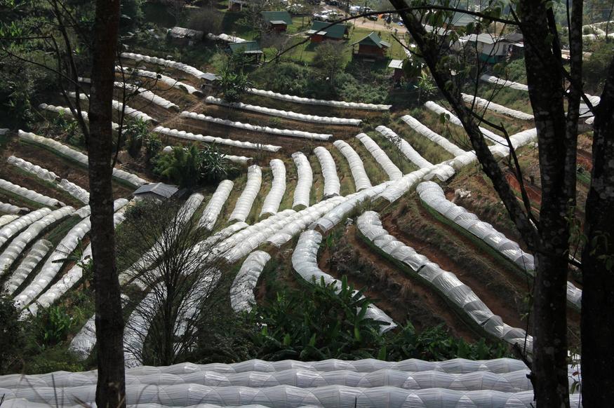 ดอยชัวร์ญ่า (Doi Sureya) ที่พักวิวสวยบนดอยอินทนนท์ จังหวัดเชียงใหม่
