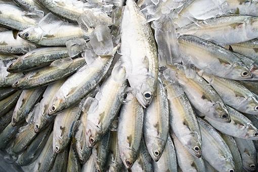 เทศกาลปลาทูอร่อยที่ท่าฉลอม ครั้งที่ 5 ระหว่างวันที่ 21 พฤศจิกายน – 2 ธันวาคม 2556จังหวัดสมุทรสาคร