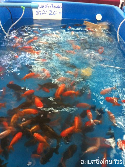 """ภาพบรรยากาศงาน """"วันปลาสวยงามแห่งชาติ"""" 2556"""