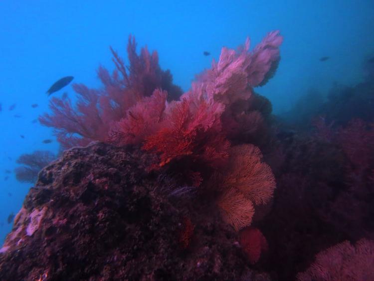 ความงดงามใต้ท้องทะเล