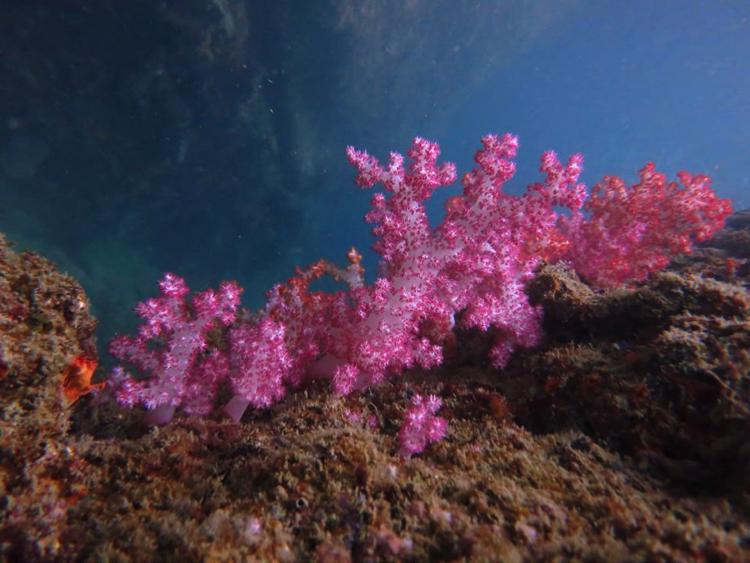 ดำสน็อคเกิ้ลน้ำตื้น ชมกัลปังหา ปะการังอ่อน