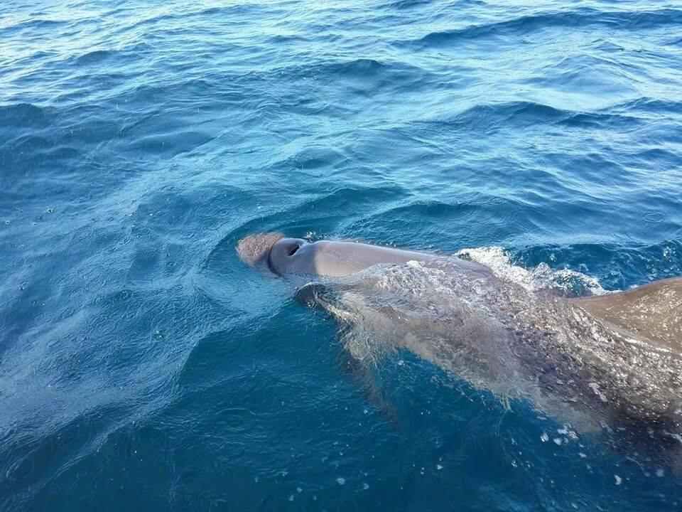 ระหว่างทางเกาะรอกอาจโชคดีเจอปลาวาฬแคระ โลมา ปลาบิน นกนางนวล เป็นต้น