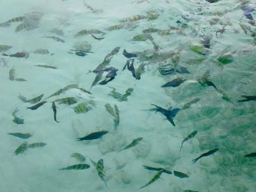 ปลาเยอะมาก น้ำใสแจ๋ว