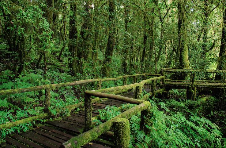 สูดอากาศบริสุทธิ์และใกล้ชิดกับธรรมชาติกับเส้นทางศึกษาธรรมชาติอ่างกา ดอยอินทนนท์ จังหวัดเชียงใหม่