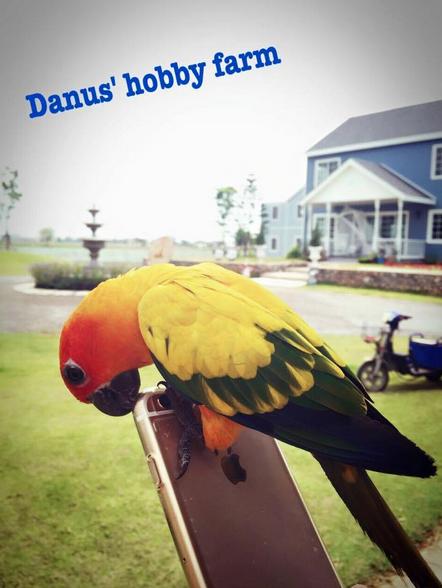 เที่ยวฟาร์มแกะ Danus Hobby Farm จังหวัดเพชรบุรี