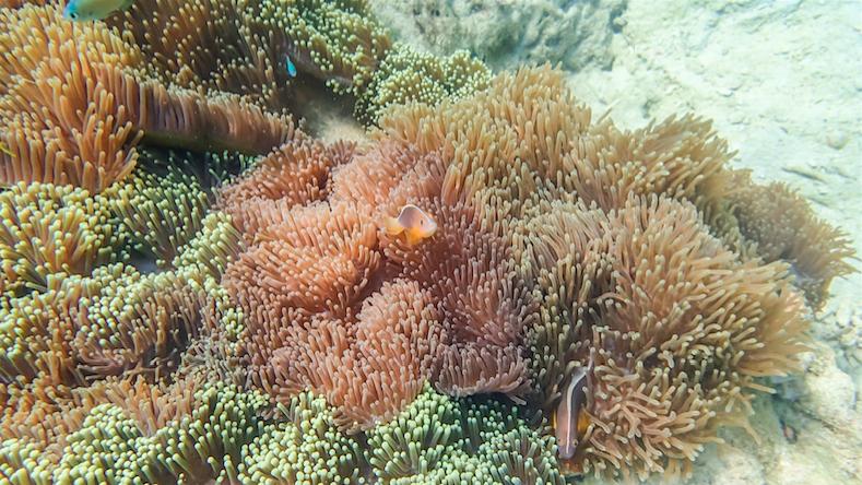 เที่ยวระนอง ท่องหัวใจมรกต เกาะค๊อกคอม (Cock's Comb Island) ทะเลพม่า