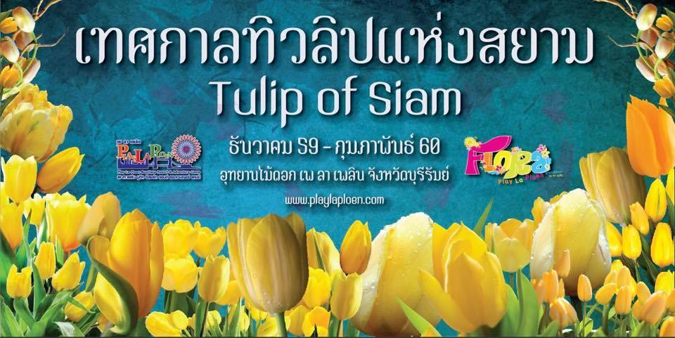 เทศกาลทิวลิปแห่งสยาม (Tulip of Siam) ธันวาคม 2559 - กุมภาพันธ์ 2560 ณ อุทยานไม้ดอกเพ ลา เพลิน จังหวัดบุรีรัมย์
