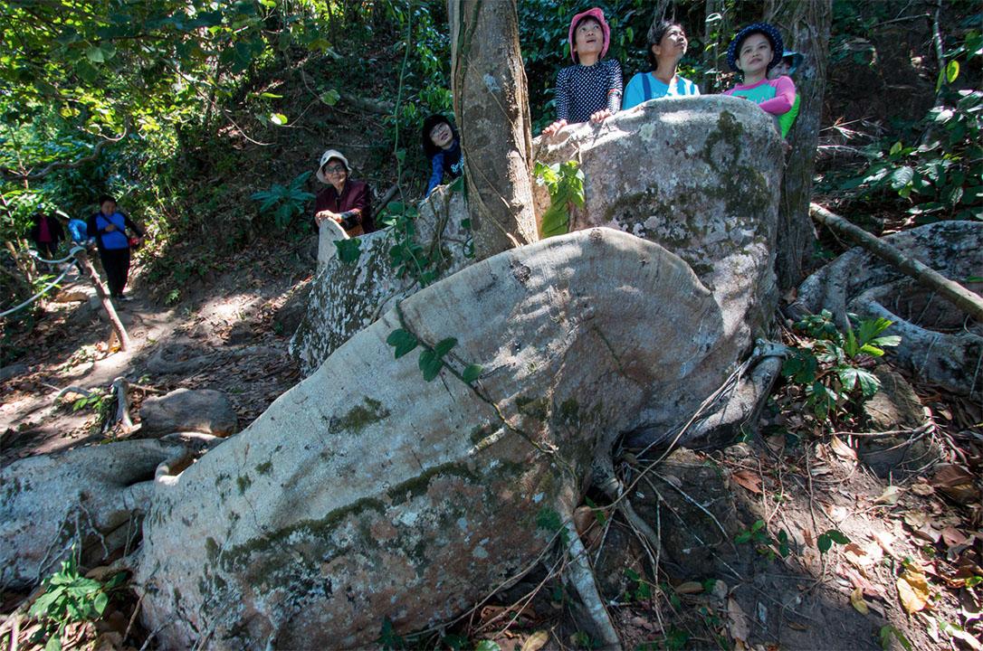 ต้นไม้พันปี