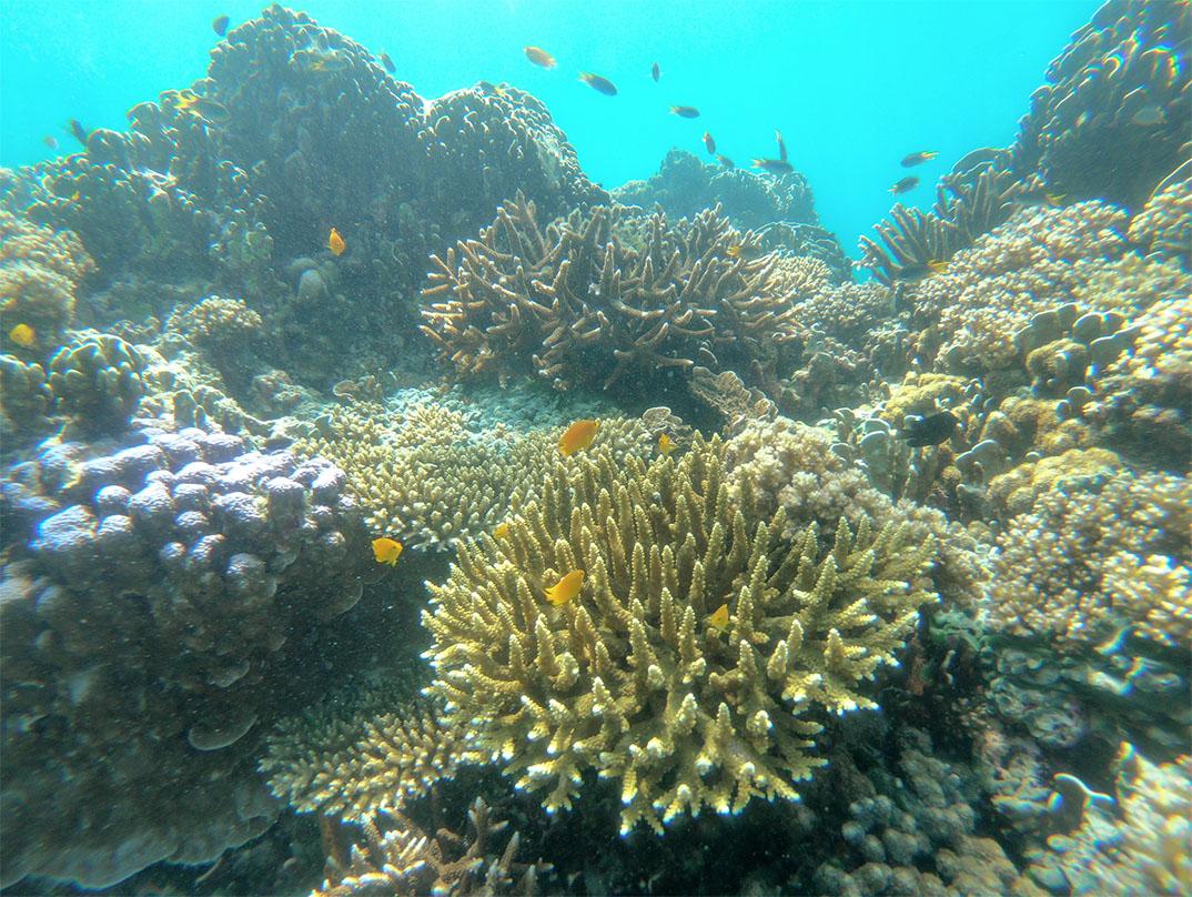 ความงดงามของโลกใต้ท้องทะเล ณ จุดดำน้ำด้านใต้ของเกาะบรูเออร์