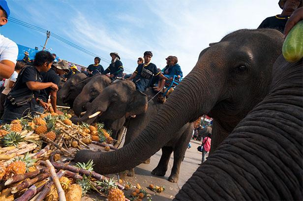 ประเพณีบวชนาคช้าง ประจำปี 2561 จังหวัดสุรินทร์