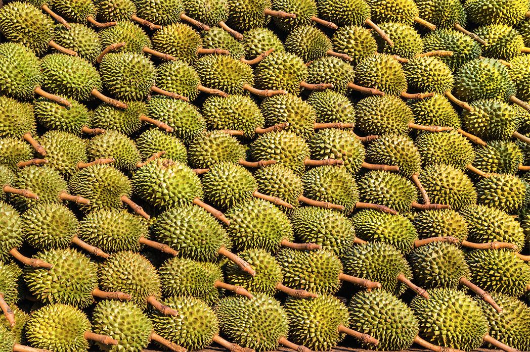 Thailand Amazing Durian and Fruit Fest 2018 ศูนย์การค้าเซ็นทรัลเวิลด์ กรุงเทพมหานคร