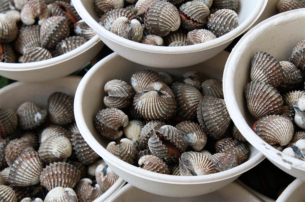 เทศกาลกินหอย ดูนก ตกหมึก ชะอำ ครั้งที่ 19 วันที่ 8-15 กันยายน 2561 ณ จุดชมวิวชายหาดชะอำ จังหวัดเพชรบุรี
