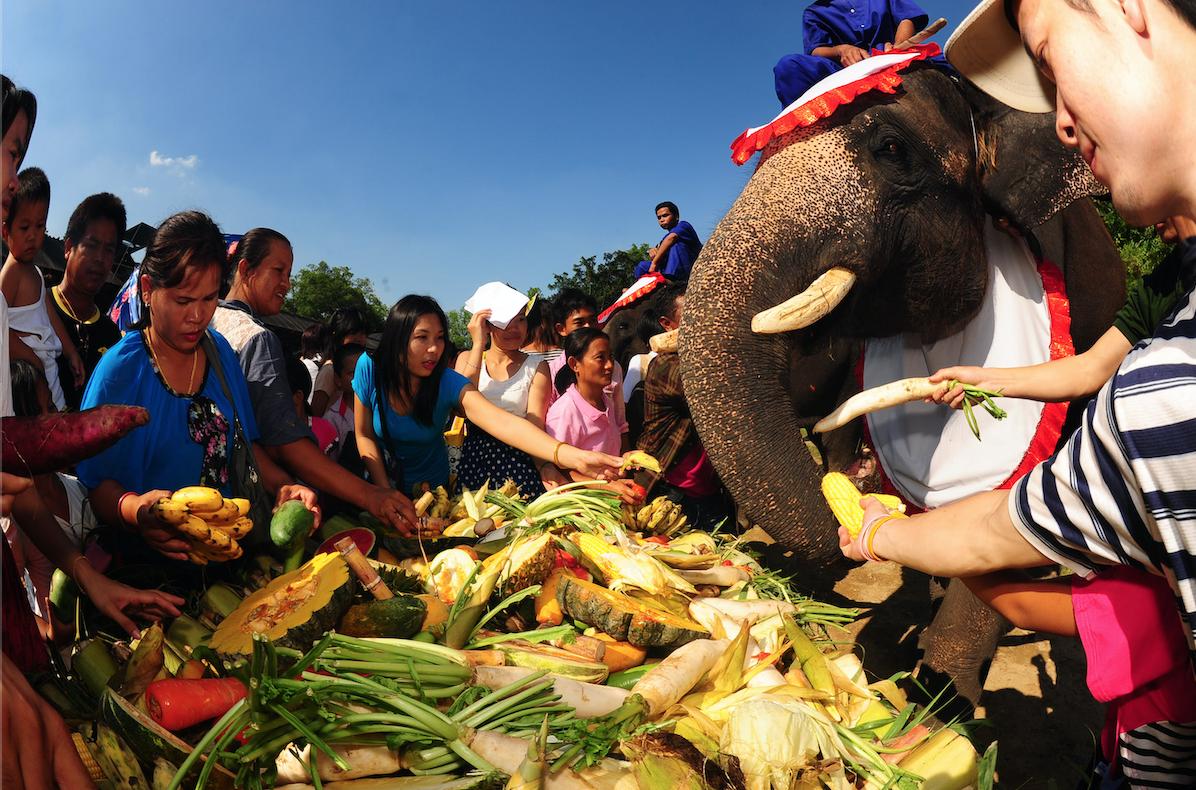 มหัศจรรย์งานแสดงช้างสุรินทร์ประจำปี 2562 ครั้งที่ 59 และงานเลี้ยงอาหารช้างที่ยิ่งใหญ่ของโลก