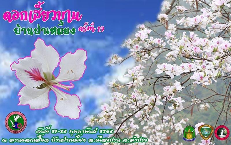 เทศกาลดอกเสี้ยวบาน บ้านป่าเหมี้ยง อุทยานฯ แจ้ซ้อน นครลำปาง ประจำปี 2563