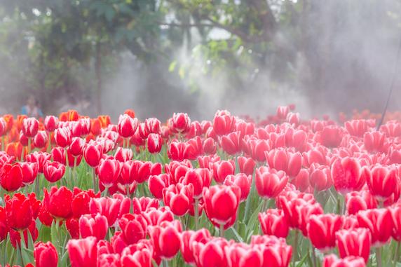 งานเชียงรายดอกไม้งาม ครั้งที่ 17 และดนตรีในสวน
